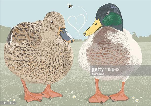 mr & mrs duck - webbed foot stock illustrations, clip art, cartoons, & icons