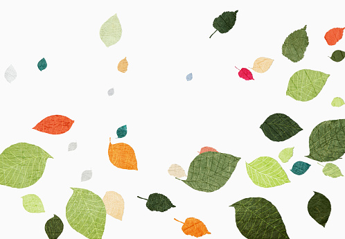 Multi colored leaves falling over white background - gettyimageskorea