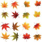 Multicolored Autumn leaves