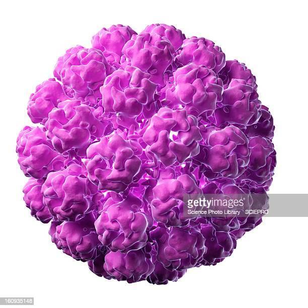 Murine polyomavirus, artwork
