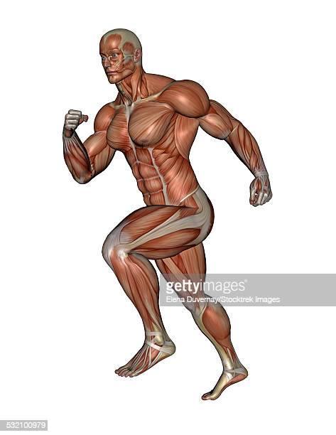 ilustrações, clipart, desenhos animados e ícones de muscular man running, isolated on white background. - perna humana