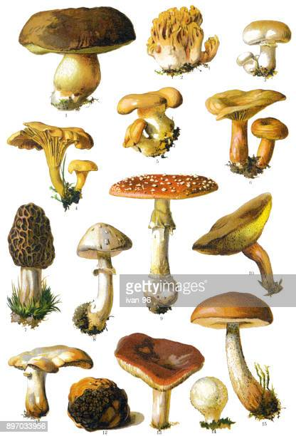 mushroom - mushrooms stock illustrations