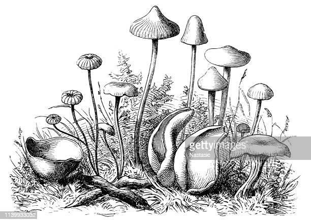 mushrooms - mushrooms stock illustrations