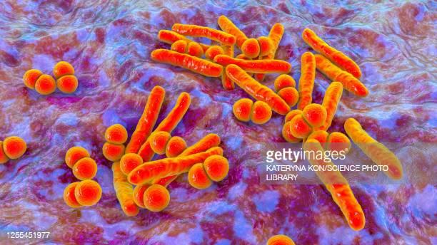mycobacterium and streptococcus bacteria, illustration - streptococcus pneumoniae stock illustrations