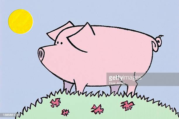 Naive color illustration of a pig.