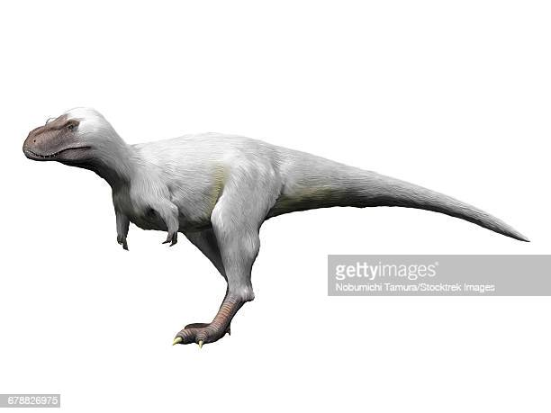 Nanuqsaurus is a theropod from the Late Cretaceous period of Alaska.