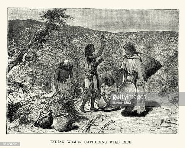 native american women gathering wild rice, nebraska 19th century - indigenous north american culture stock illustrations, clip art, cartoons, & icons