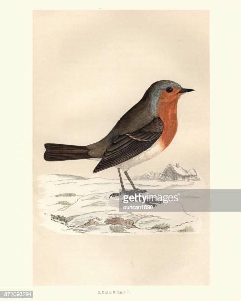 natural history, birds, robin redbreast (erithacus rubecula) - engravement stock illustrations