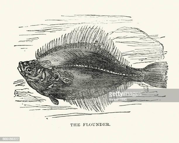 Natural History - Fish - Flounder