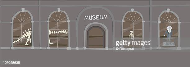 natural history museum - history stock illustrations