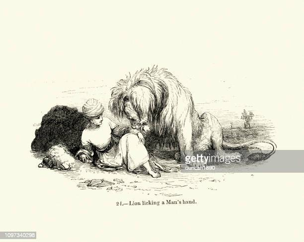 nature, big cats, lion licking a mans hand, 19th century - tame stock illustrations