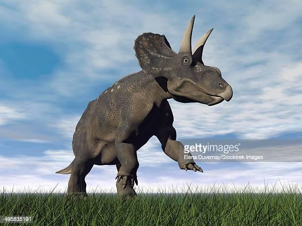 Nedoceratops dinosaur grazing in grassy field.