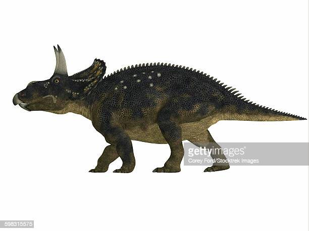 Nedoceratops dinosaur, side view.