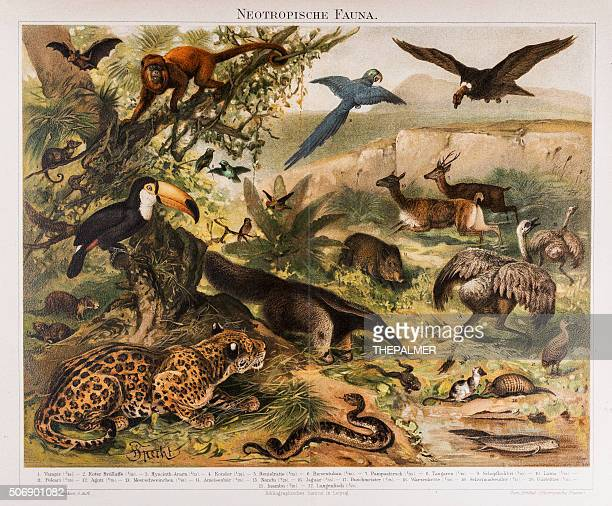 Neotropical Fauna Antique Lithograph 1896