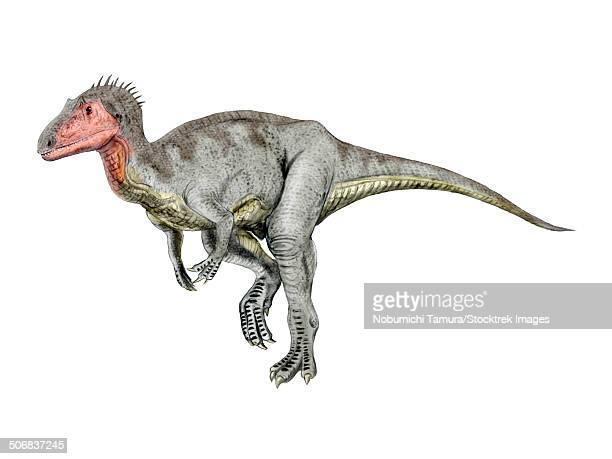 neovenator dinosaur, white background. - animal limb stock illustrations, clip art, cartoons, & icons