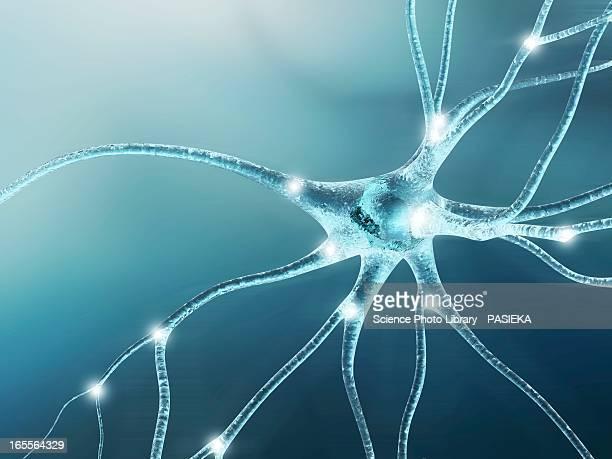 nerve cell, artwork - human nervous system stock illustrations