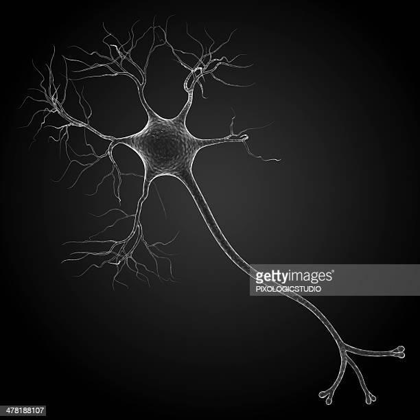 ilustraciones, imágenes clip art, dibujos animados e iconos de stock de nerve cell, artwork - cerebral nuclei