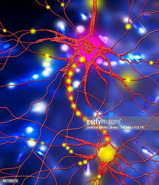 nerve cell, computer artwork - physiology stock illustrations, clip art, cartoons, & icons