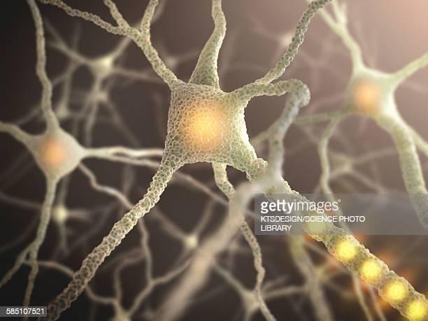nerve cell, illustration - dendrite stock illustrations