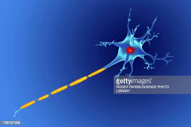 nerve cell, illustration - sclerosis stock illustrations