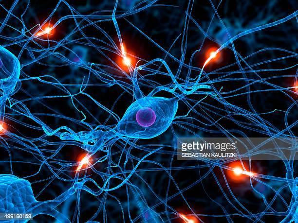 nerve cell network, artwork - nerve cell stock illustrations