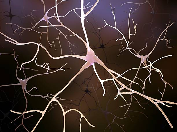 Nerve Cells, Artwork Wall Art