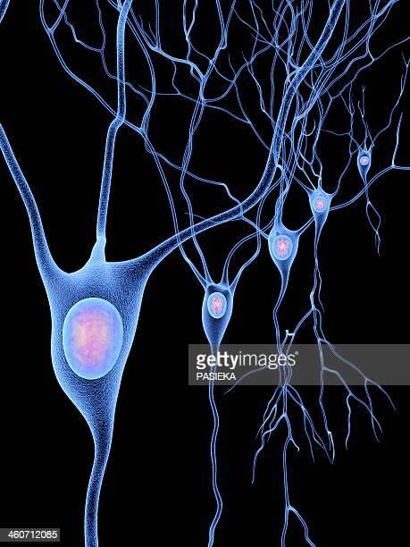 ilustrações de stock, clip art, desenhos animados e ícones de nerve cells, artwork - sistema nervoso central
