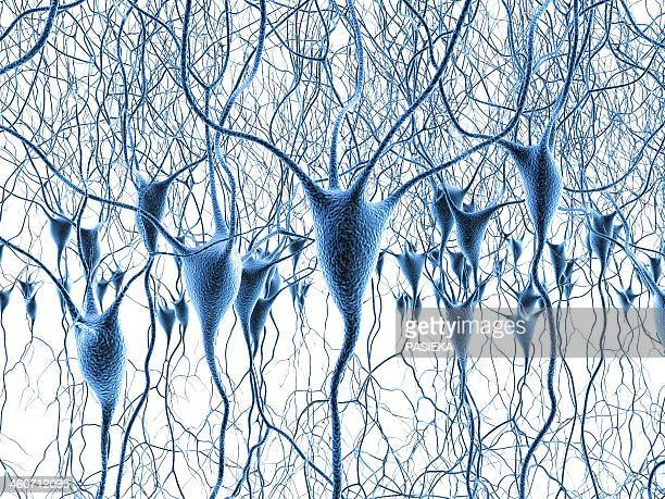nerve cells, artwork - dendrite stock illustrations