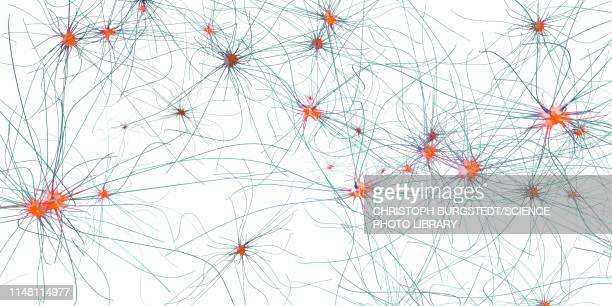 nerve cells, illustration - synapse stock illustrations
