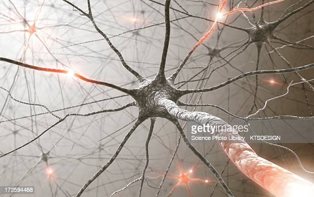 neural network, artwork - human nervous system stock illustrations