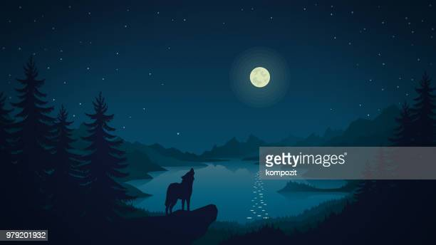 night landscape -  the wolf howls at the moon - howling stock illustrations, clip art, cartoons, & icons