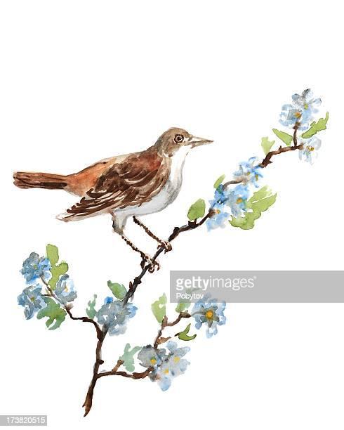 nightingale - mockingbird stock illustrations, clip art, cartoons, & icons