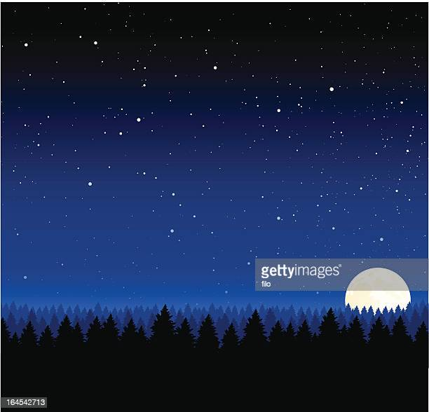 nighttime background - treelined stock illustrations, clip art, cartoons, & icons