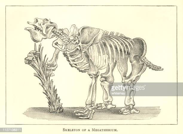 Nineteenth century engraving of the skeleton of a megatherium