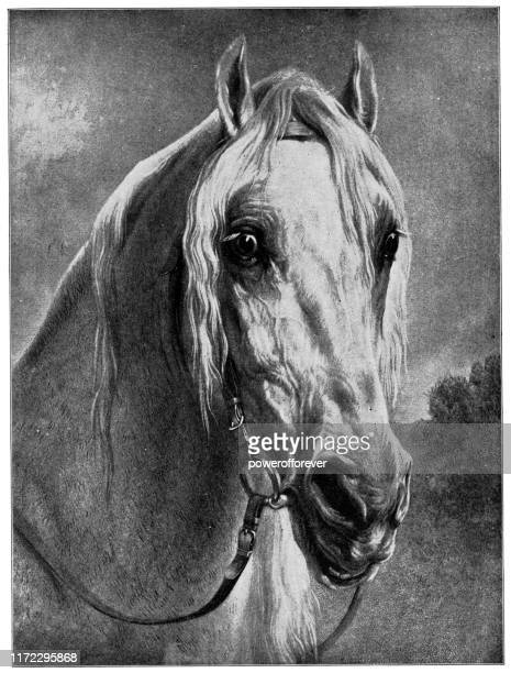 a noble charger by rosa bonheur - 19th century - arabian horse stock illustrations, clip art, cartoons, & icons