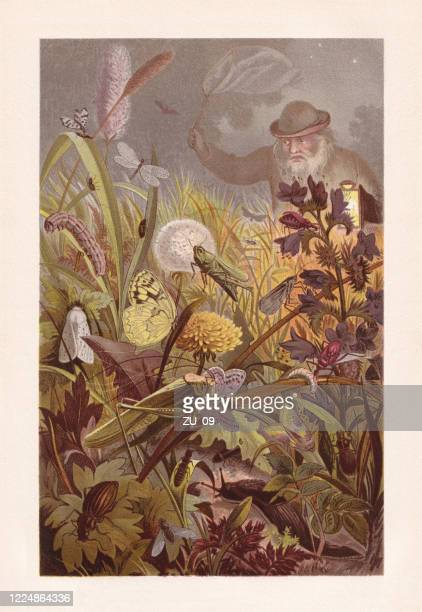 ilustraciones, imágenes clip art, dibujos animados e iconos de stock de actividades nocturnas de los insectos, cromolitografía, publicada en 1884 - biodiversidad