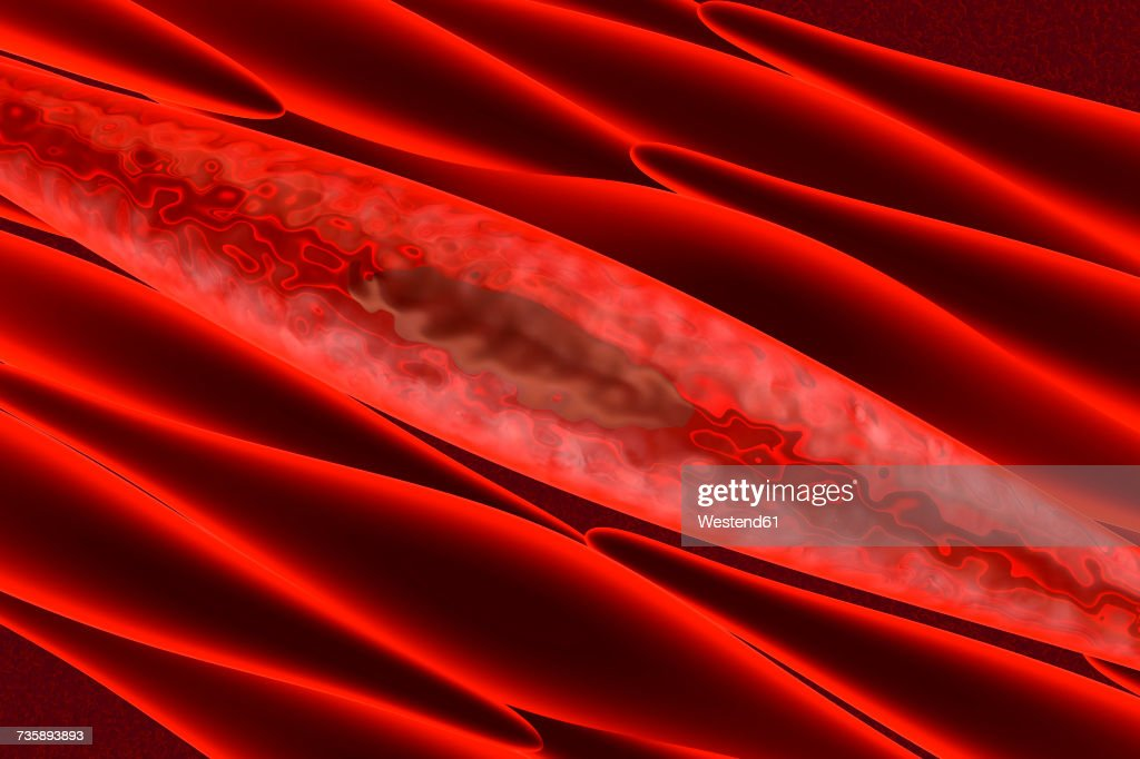 Muscle Cell Stock Illustrations And Cartoons | Getty Images