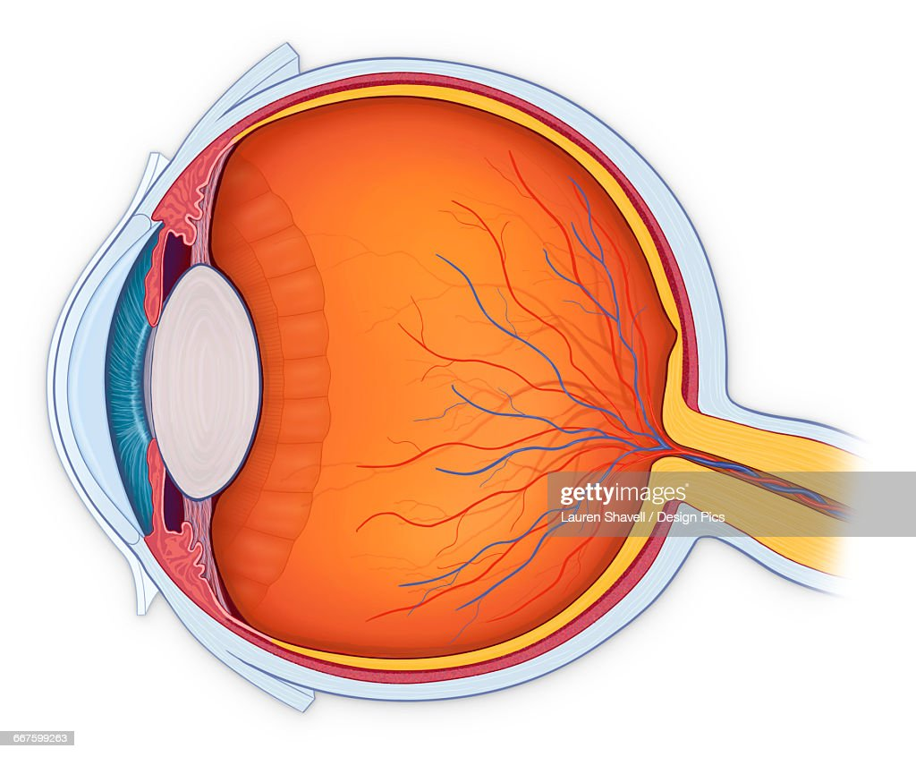 Anterior Chamber Stock Illustrations And Cartoons | Getty Images