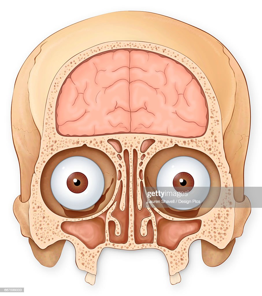 Eye Socket Stock Illustrations And Cartoons | Getty Images