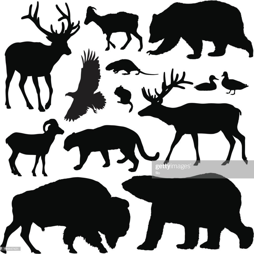 North American animales : Ilustración de stock
