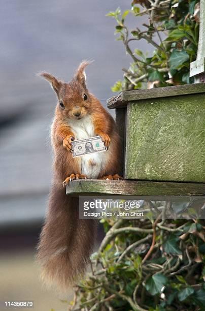 illustrations, cliparts, dessins animés et icônes de northumberland, england - écureuil