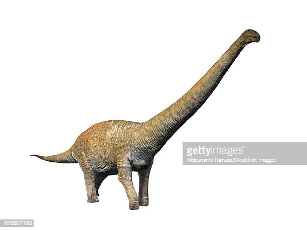 Notocolossus gonzalezparejasi is a large titanosaur from the Late Cretaceous period of Argentina.