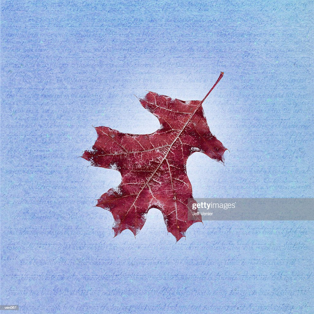 Oak Leaf on Descriptive Background : Ilustración de stock