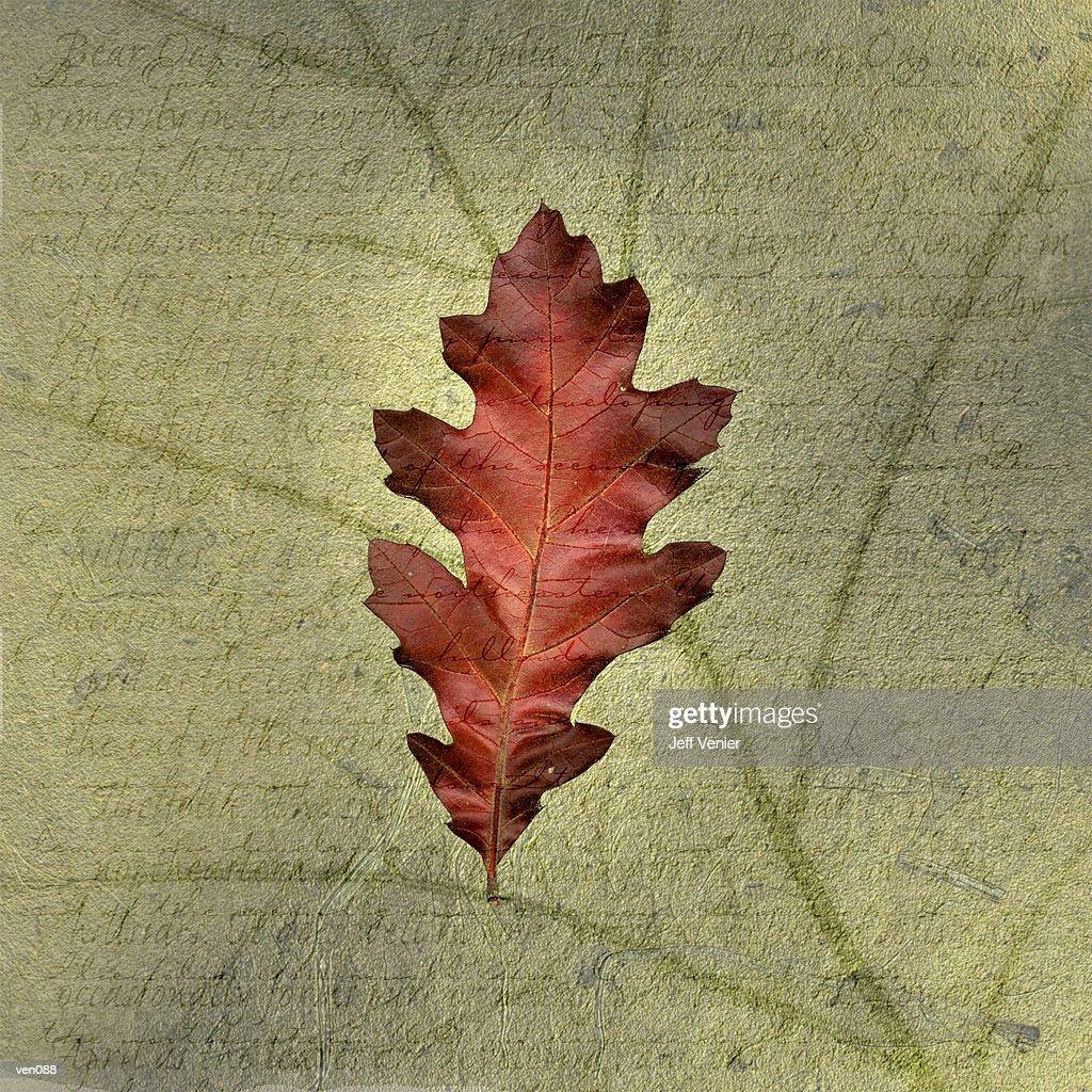 Oak Leaf on Descriptive Background : Ilustración de stock
