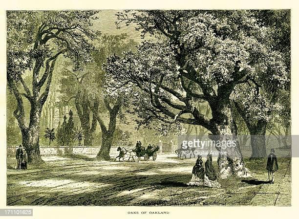 oaks of oakland, california | historic american illustrations - oakland california stock illustrations