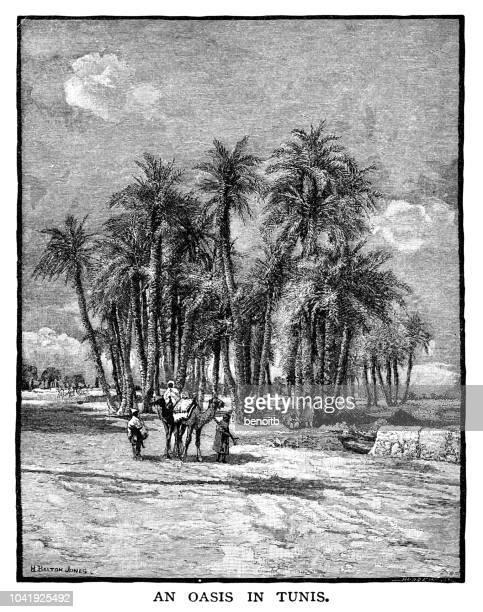 oasis in tunis - tunis stock illustrations