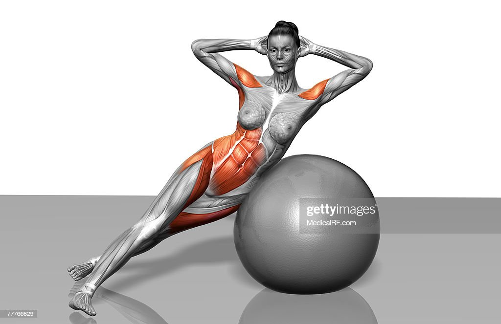 Obliques Exercise High-Res Vector Graphic - Getty Images