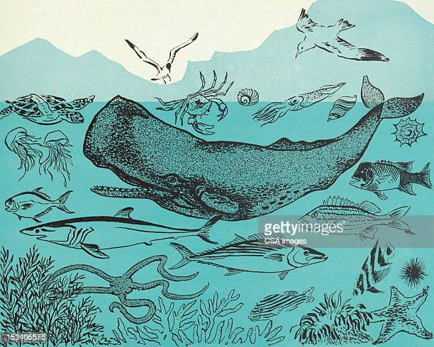 ocean sealife - whales stock illustrations, clip art, cartoons, & icons