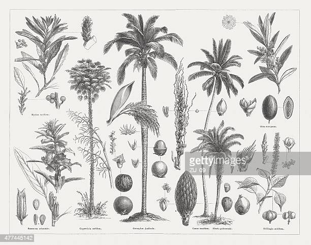 Oil plants, wood engravings, published in 1877