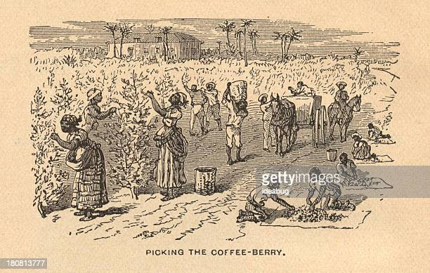 ilustrações, clipart, desenhos animados e ícones de velho, preto e branco, ilustração de escravatura, desde 1875 - feijão